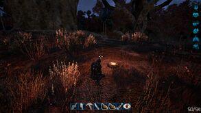 Fragmented - campfire at night - desert biome