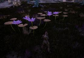 Herbal Flower3
