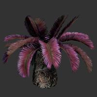 File:Sago Palm.png