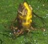 Monster TreeFragment.png