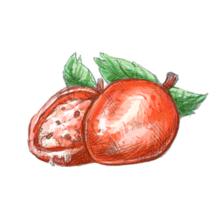 Moshe moshe fruit
