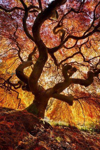 Magic-tree-1354236689 b