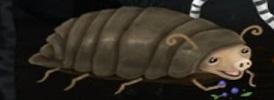 Beetlepig