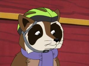 Raccoon 2004