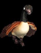 GooseWalking