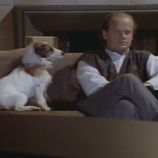 Eddie gazing at Frasier
