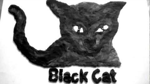 Black Cat Pictures