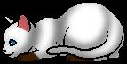Ветер РК (Котёнок)
