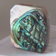 Abalone real