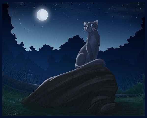 File:Bluestar-2-warrior-cats-forever-30356796-1030-825.jpg