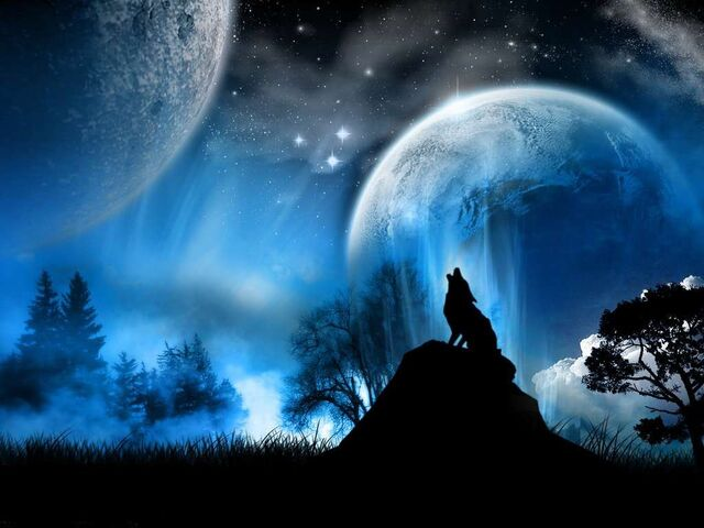 File:Wolf howling at moon.jpg