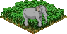 Ts.elephant