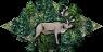 Ts.taiga reindeer