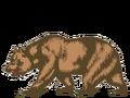Bear.png