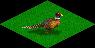 Ts.grassland pheasant