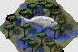 Ts.mangrove fish