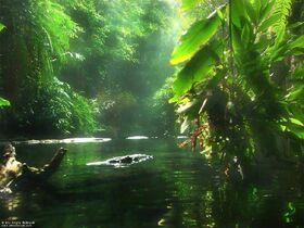 Inner-jungle