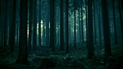 Dark-Forest-Wallpaper-1920x1080