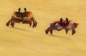 The Crabs of Seaside