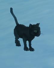 Mr.Kitty