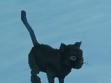Mr. Kitty