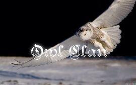 Owl Clan