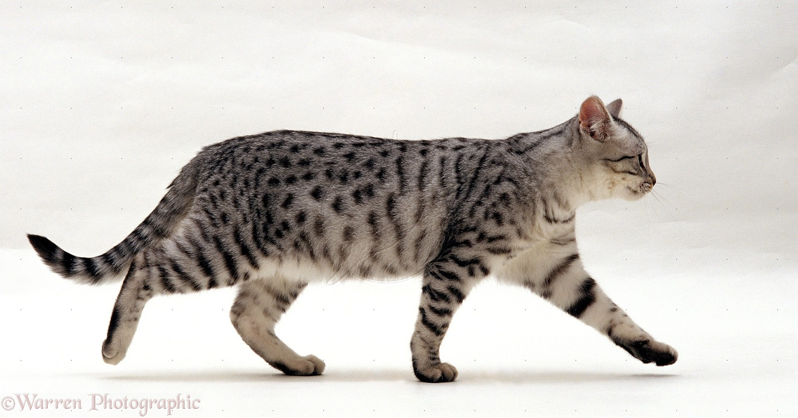 Good Names For Wild Cats