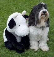 Winston and Mr Stuffy
