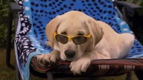 Marley and Me The Puppy Years Official Trailer