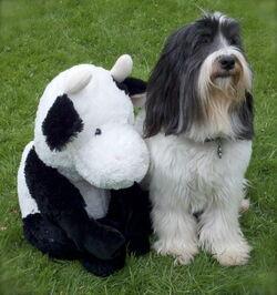 Winston & Mr. Stuffy