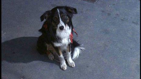 File:Jason Takes Manhattan Toby the dog.jpg