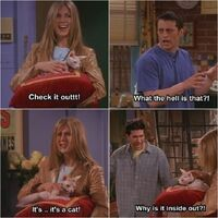 Friends funny-Rachel showing Ross & Joey her cat