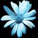 600px-FlowerGlyph
