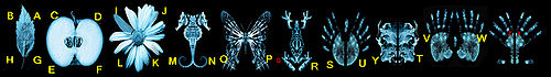 500px-Glyphs