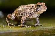 Gender of a Toad