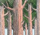 Árvores-das-rodas