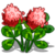 Red Clover-icon