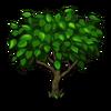 Peach Tree Big-icon