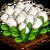 Marshmallow Crop-icon