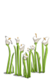 Wildflowers-icon
