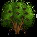 Elderberry Tree-icon