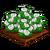 Gardenias-icon