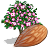 Almond Tree-icon.png