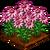 Purple Echinacea-icon
