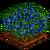 Juniper Berry-icon