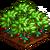 Festive Cinnamon-icon