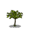 Cherry Tree Sapling-icon