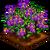 Nightshade-icon