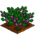Beautyberry-icon
