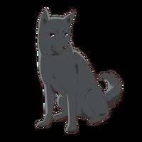 Shigure - Dog